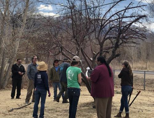 Fruit Tree Grafting Workshop